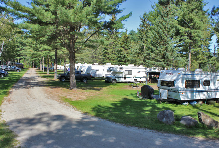 Campsites Pine Trees Road